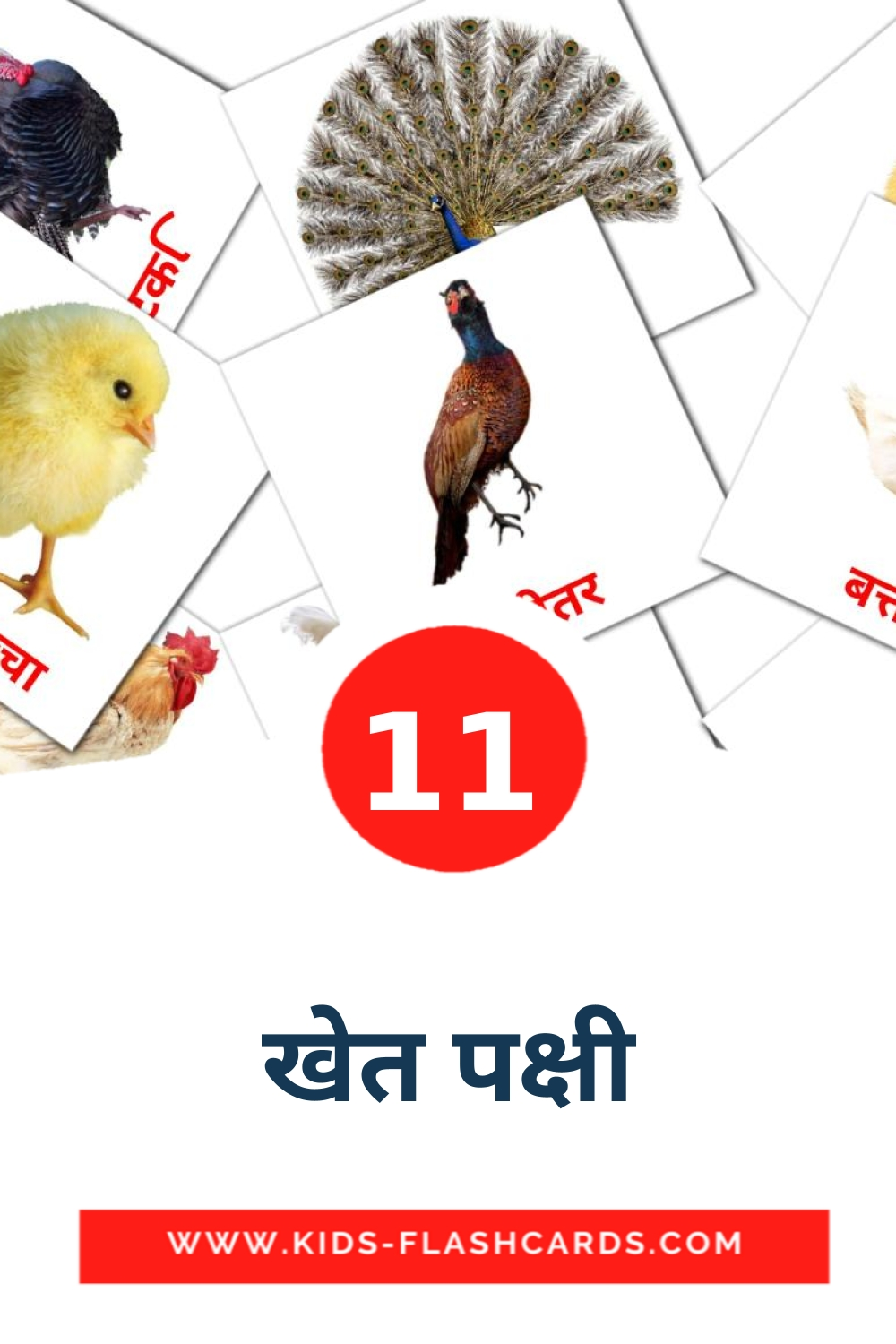 11 खेत पक्षी Picture Cards for Kindergarden in hindi