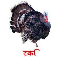 टर्की picture flashcards