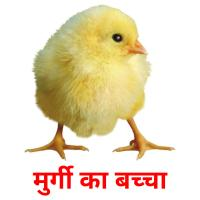 मुर्गी का बच्चा picture flashcards