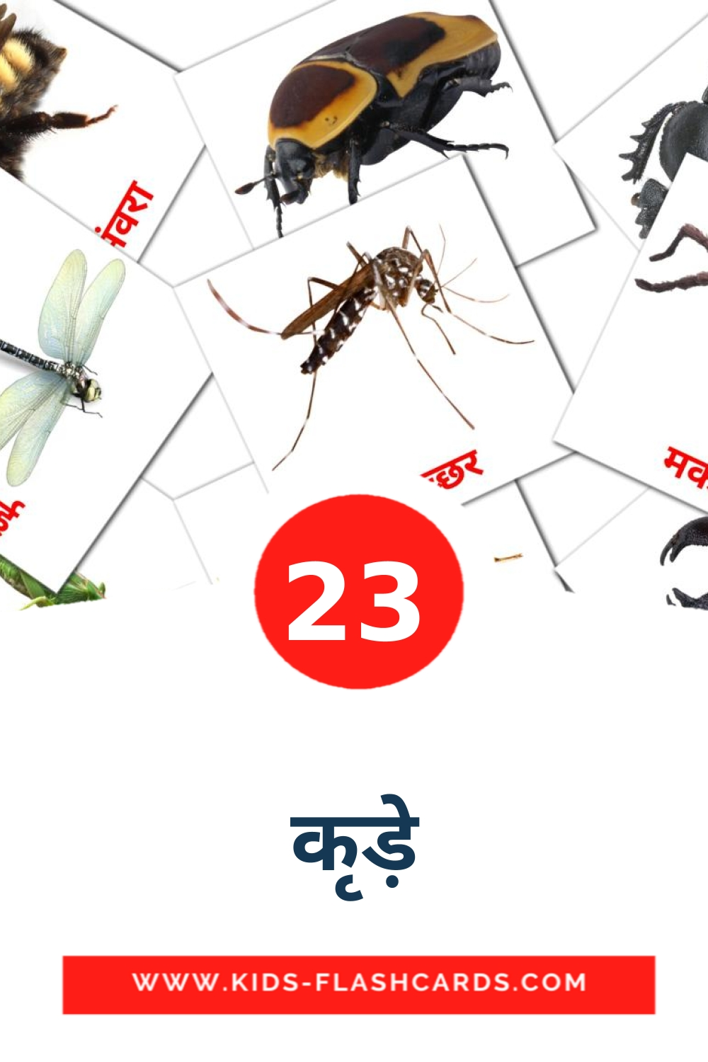 23 कीड़े Picture Cards for Kindergarden in hindi