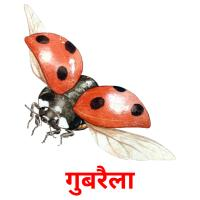 गुबरैला picture flashcards
