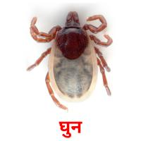 घुन picture flashcards