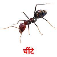 चींटी picture flashcards