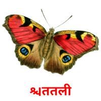 तितली picture flashcards