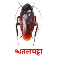 तिलचट्टा picture flashcards