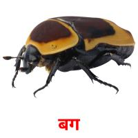 बग picture flashcards
