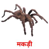 मकड़ी picture flashcards