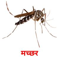 मच्छर picture flashcards