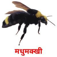 मधुमक्खी picture flashcards