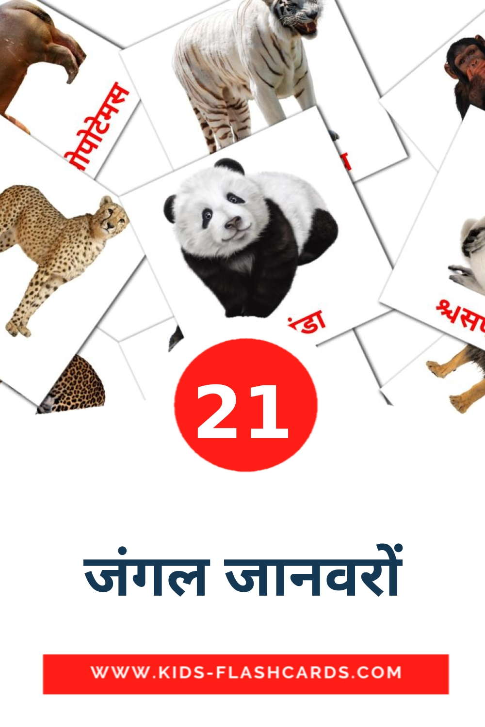 21 जंगल जानवरों Picture Cards for Kindergarden in hindi