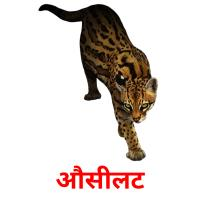 औसीलट picture flashcards