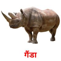 गैंडा picture flashcards