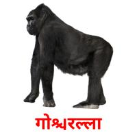 गोरिल्ला picture flashcards