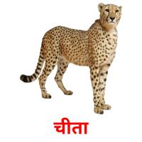 चीता picture flashcards