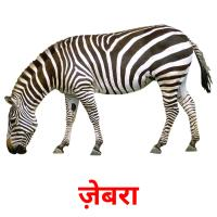 ज़ेबरा picture flashcards