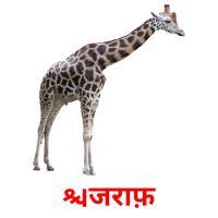 जिराफ़ picture flashcards