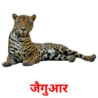 जैगुआर picture flashcards