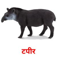टपीर picture flashcards