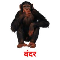 बंदर picture flashcards