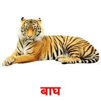 बाघ picture flashcards