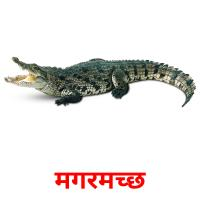 मगरमच्छ picture flashcards