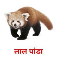 लाल पांडा picture flashcards