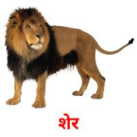 शेर picture flashcards