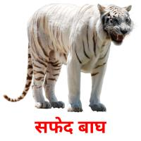 सफेद बाघ picture flashcards