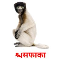 सिफाका picture flashcards