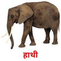 हाथी picture flashcards