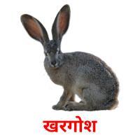 खरगोश picture flashcards
