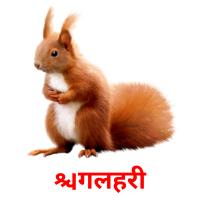 गिलहरी picture flashcards