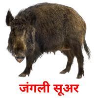 जंगली सूअर карточки энциклопедических знаний