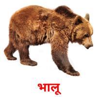 भालू picture flashcards