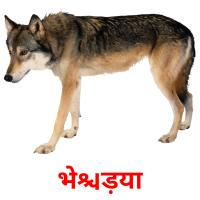भेड़िया picture flashcards