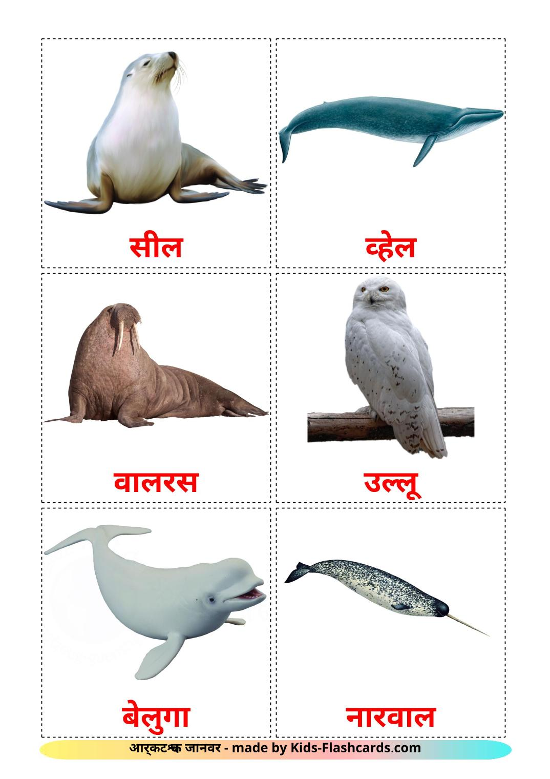 Arctic animals - 14 Free Printable hindi Flashcards