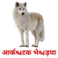 आर्कटिक भेड़िया picture flashcards