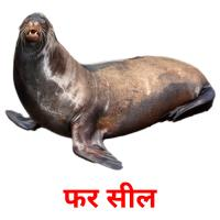 फर सील picture flashcards
