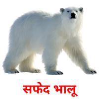 सफेद भालू picture flashcards