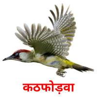 कठफोड़वा picture flashcards
