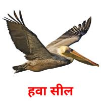 हवा सील picture flashcards