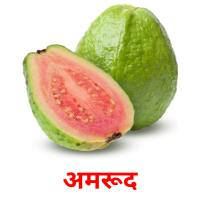 अमरूद picture flashcards