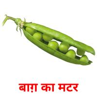 बाग़ का मटर picture flashcards