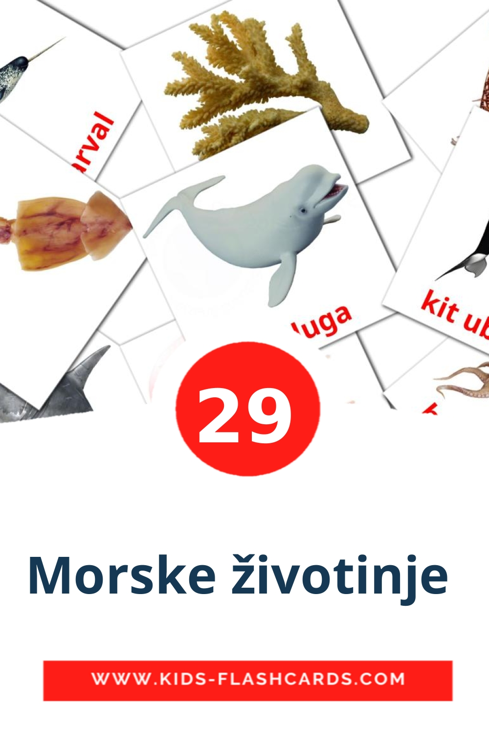 23 Morske životinje  Picture Cards for Kindergarden in croatian