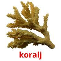koralj picture flashcards