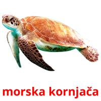 morska kornjača picture flashcards