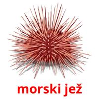 morski jež card for translate