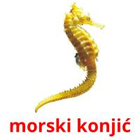 morski konjić card for translate