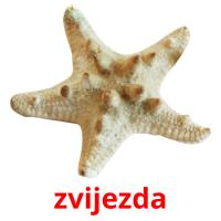 zvijezda picture flashcards