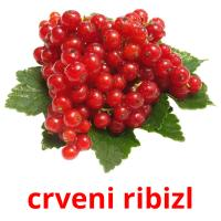 crveni ribizl picture flashcards